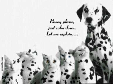 dalmatian caught cheating